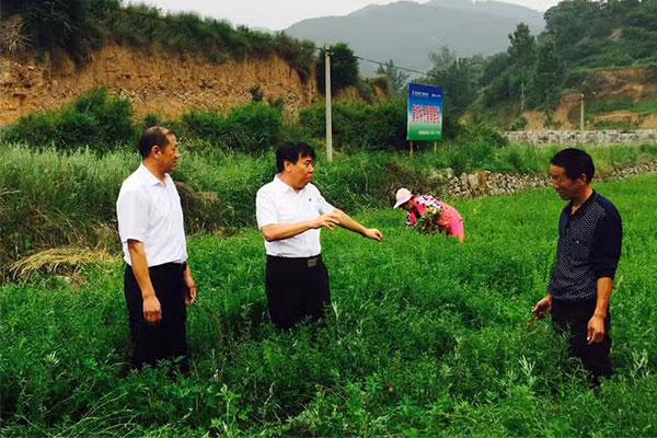 李安平(中)和农民探讨中药材种植